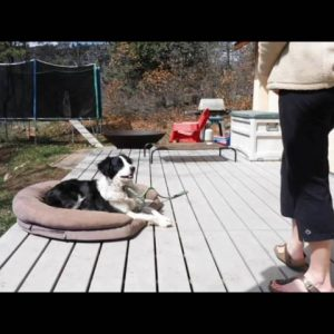 Train your Dog to Stay; Place Command part 2