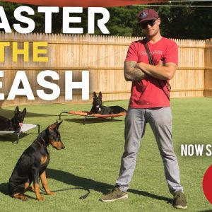 Stop leash pulling in 3 Easy steps Ep-3- Dog Training with America's Canine Educator