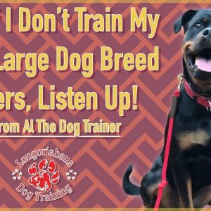 What Happens If You Don't Train Your Dog | Tips From Al The Dog Trainer
