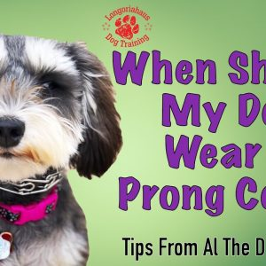 When Should My Dog Wear A Prong Collar? - Tips From Al The Dog Trainer