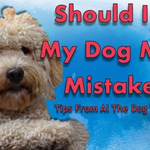 Why Should I Let My Dog make Mistakes?Dogs To Make Mistakes