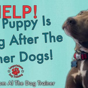 How Do I Get My Puppy To Stop Going After My Other Dogs? - Tips From Al The Dog Trainer