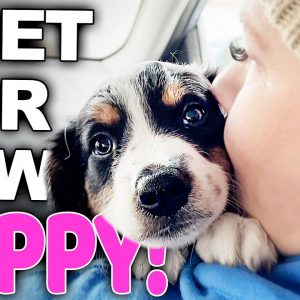 Your Complete Guide For Bringing A New Puppy Home