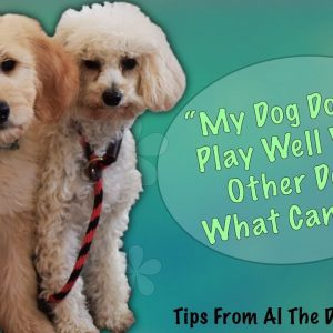 What To Do If Your Dog Doesn't Play Well With Other Dogs - Tips From Al The Dog Trainer