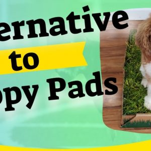 Alternative to Puppy Pads