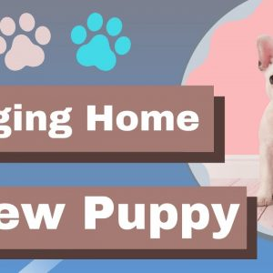 Bringing Home A New Puppy -Care and Training Tips