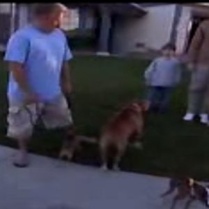 Calm Down! | Dog Whisperer