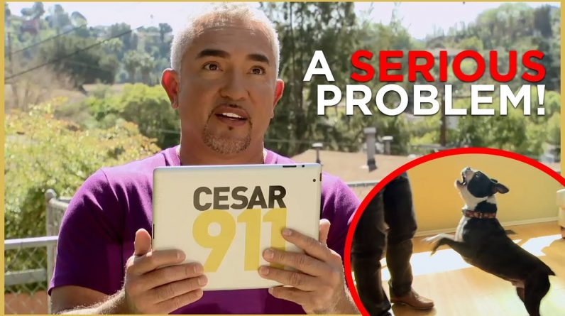 Cesar Faces a HYPERACTIVE dog (Cesar 911 Shorts)