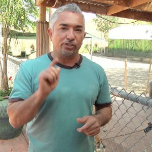 "Cesar Millan Explains: The Origin of Cesar's signature ""Tsch!"""