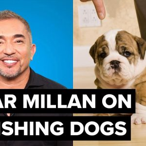 Cesar Millan's effective doggy training