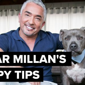 Cesar Millan's puppy tips