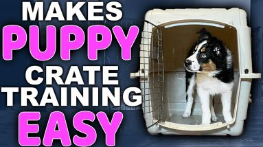 Choosing The Right Puppy Crate Training Location