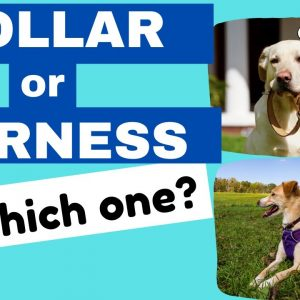 Collar or Harness for Puppies - Which one to pick?