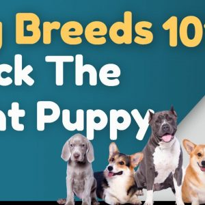 Dog Breeds 101  Picking the Right Puppy for Your Family