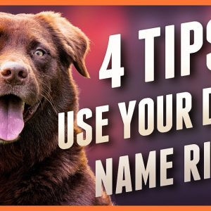 Dog Ignoring You? These 4 Dog Name Strategies Will Help!