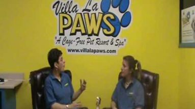 Dog Obedience: Dog Training Tips from Villa La PAWS