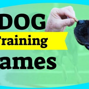Dog Training Games - When Stuck At Home