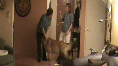 Door  Dashing Pt 1: Dog Training Tips from Villa La PAWS, Phoenix AZ