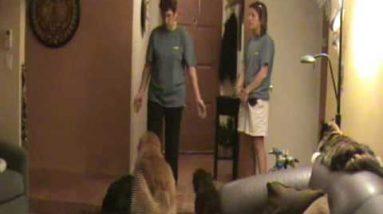 Door Dashing Pt 2: Dog Training Tips from Villa La PAWS, Phoenix AZ