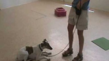 Free Shaping Pt. 1: Dog Training Tips from Villa La PAWS
