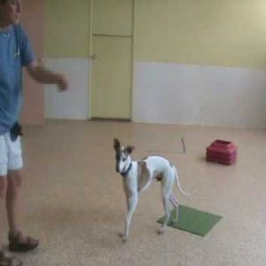 Free Shaping Pt. 2: Dog Training Tips from Villa La PAWS