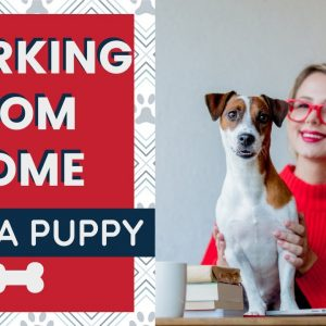 Working From Home with Dogs - Puppy Edition - 7 Tips to Stay Productive While Keeping a Puppy Quiet