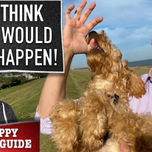 This is How You Punish a Dog. Real World Dog Training For Real Dogs! This is legit!!! (NPSG Ep 17)