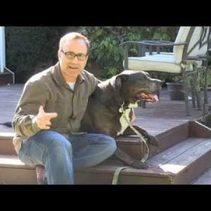 Teach an Old Dog New Tricks – Keeping Old Dogs Active | Vita Bone Dog Training