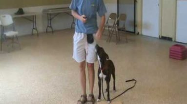 Heeling: Dog Training Tips from Villa La PAWS