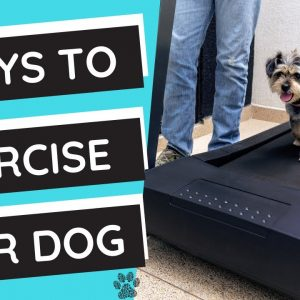 How to Exercise Your Dog 6 Ways to Drain Your Puppy's Energy