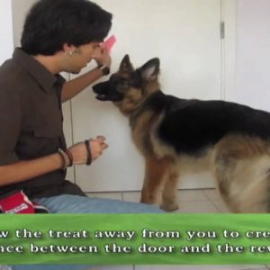 How to teach your dog to CLOSE DOORS!