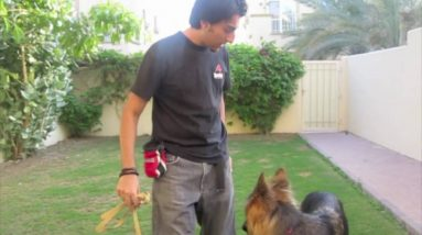 How to teach your dog to STOP pulling! (part 1)
