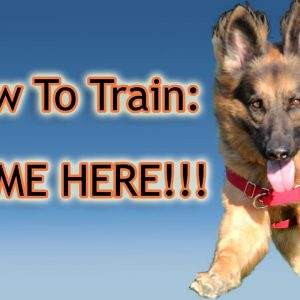 "How To Train Your Dog: ""Come Here!"" PERFECTLY!!!"