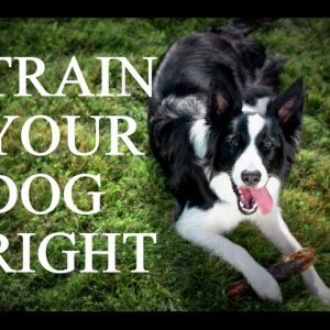 How to Train Your Dog - Setting Your Dog Up To Succeed