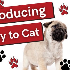 Introducing Puppy To Cat - Tips To Make It A Positive Experience