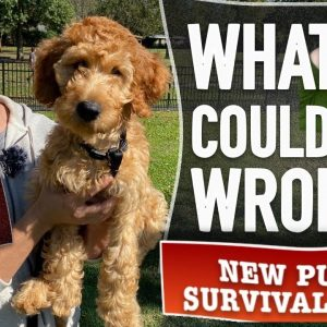 Tran ANY Dog To Listen Around ANY Distraction! (New Puppy Survival Guide EP. 19)