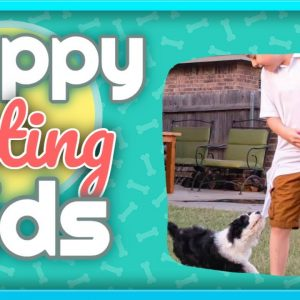 Puppy Biting Kids - Training Tips