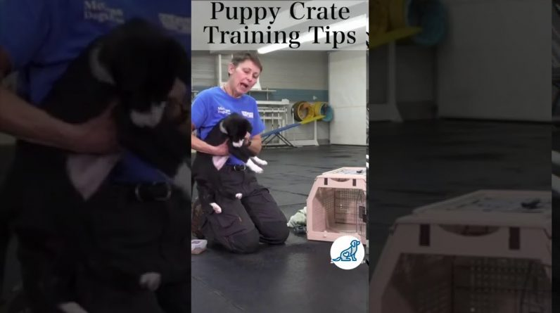 Puppy Crate Training #Shorts