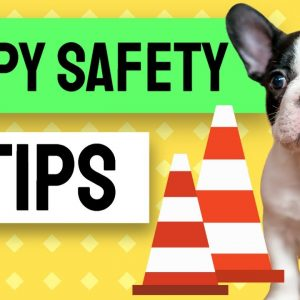 Puppy Safety Guidelines - Part 1