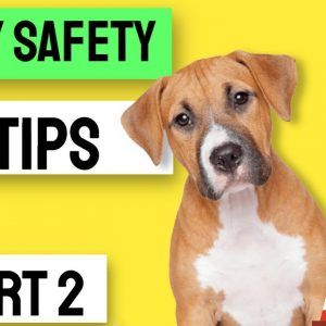 Puppy Safety Tips for New Puppy Owners