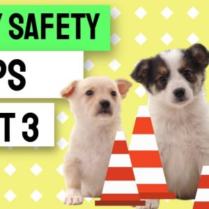 Puppy Safety Tips - Part 3