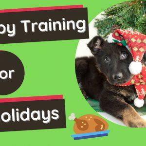 Puppy Training 101 - Safety Tips For The Holidays