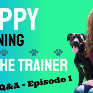 Puppy Training  - Ask the Dog Trainer Q&A Episode 1