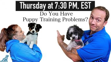 Puppy Training Challenges During The First Few Weeks Home
