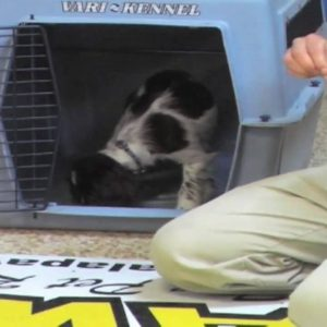 Puppy Training - Crate - Wendi Faircloth