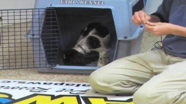 Puppy Training - Crate - Wendi Faircloth