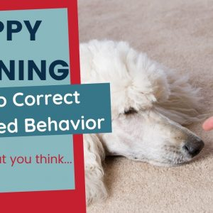 Puppy Training - How to Correct Unwanted Behaviors