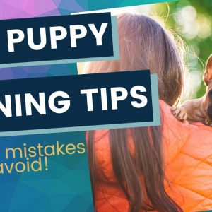 New Puppy Training Myths and Mistakes To Avoid As a First Time Puppy Owner