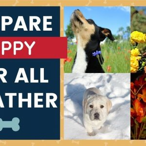 Puppy Training - Prepare Puppy For All Weather Conditions