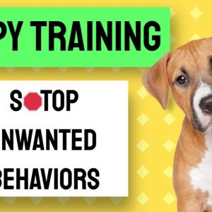 "Puppy Training Using ""Nothing In Life Is Free"" Training"